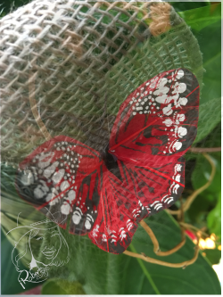 Butterfly from Dad's Plant
