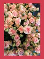 Laced Vintage Blooms